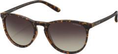 Donkerbruine Polaroid Sunglasses PLD6003