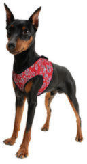 AQUA COOLKEEPER COOLING COMFY HARNESS RED WESTERN #95; SMALL 30-34 CM