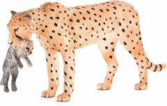 MOJO Cheetah Female with Cub