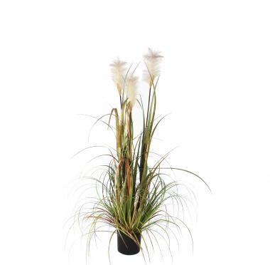 Afbeelding van Groene Mica Decorations Mica flowers pluimgras foxtail maat in cm: 120 x 45 in plastic pot