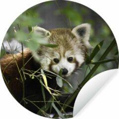 WallCircle Baby rode panda tussen de takken Wandcirkel behangsticker ⌀ 140 cm / behangcirkel / muurcirkel / wooncirkel - zelfklevend & rond uitgesneden