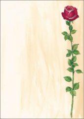 Creme witte Cadeautekst papier roos
