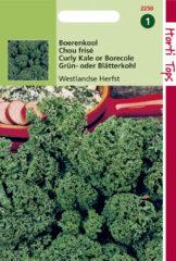 Groene Hortitops Zaden - Boerenkool Westlandse Herfst, Laat Type