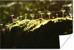 Groene PosterMonkey Kleurrijke paddenstoelen in het zonlicht poster 60x40 cm - Foto print op Poster (wanddecoratie woonkamer / slaapkamer) / Planten Poster