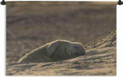 1001Tapestries Wandkleed Slapende Baby Dieren - Jonge slapende zeehond Wandkleed katoen 60x40 cm - Wandtapijt met foto