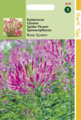 Roze Hortitops Zaden - Cleome Spinosa Rose Queen