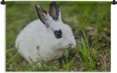 1001Tapestries Wandkleed Baby konijnen - Baby konijn in een veld Wandkleed katoen 180x120 cm - Wandtapijt met foto XXL / Groot formaat!