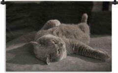 1001Tapestries Wandkleed Dierendag - Kat op een grijze stoel Wandkleed katoen 120x80 cm - Wandtapijt met foto