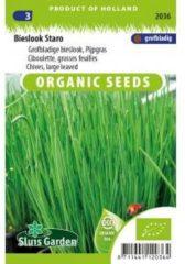 Groene Sluis Garden - Bieslook Staro Biologisch (Allium schoenoprasum)