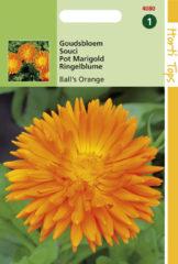Hortitops Zaden - Calendula officinalis Dubbelbl. Ball's Oranje
