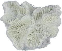 Aqua d'ella Aqua Della Fungia Koraal - Aquarium - Ornament - 12x12x5 cm Wit