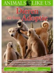 Coast To Coast Music Group B.V Dieren En Hun Adoptie