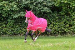 Roze Bucas Freedom Flysheet Full Neck