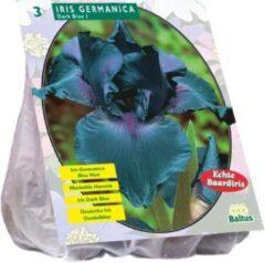 Baltus Iris Germanica Donkerblauw - 2x3 stuks