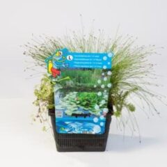 Moerings waterplanten Mix zuurstofplanten in vijvermand - 3 stuks