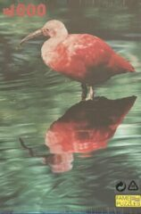 Blauwe Fame puzzles Dieren Puzzel 1000 Stukjes - Rode Ibis - Vogels