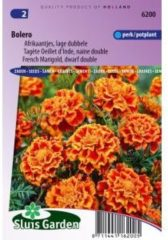 Sluis Garden Lage dubbele Afrikaantjes bloemzaden – Bolero