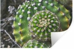 StickerSnake Muursticker Schoonmoedersstoel Cactus - Vogelperspectief van de schoonmoedersstoel cactus - 90x60 cm - zelfklevend plakfolie - herpositioneerbare muur sticker