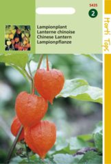 Oranje Buzzy Seeds Hortitops Zaden - Physalis Franchetti Gig.(Lampionplant)