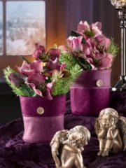 2er Set Christrosen Tewa lila
