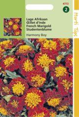 Rode Buzzy Seeds Hortitops Zaden - Tagetes patula nana Petite Harmony