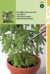 Groene Hortitops Zaden - Mimosa Pudica (Kruidje-Roer-Me-Niet)