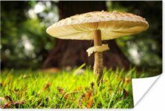 PosterMonkey Close-up van een paddenstoel in een veld Poster 180x120 cm - Foto print op Poster (wanddecoratie woonkamer / slaapkamer) / Planten Poster XXL / Groot formaat!