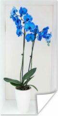 PosterMonkey De felblauwe orchideeën in een bloempot poster 80x160 cm - Foto print op Poster (wanddecoratie woonkamer / slaapkamer)