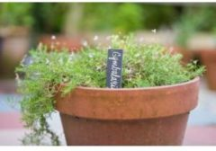Grijze Nature Leistenen Plantenetiketten - Van Natuurlijk Leisteen - 15x3cm - 5 Stuks