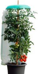 Starter Set Tomatenhut Ungefärbt