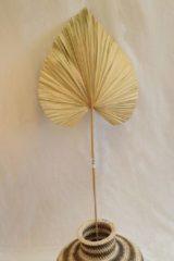 Beige Nusa Originals - Sierpluim Palm (160cm) - Woondecoratie - Fairtrade
