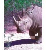 Animal Essences White rhinoceros (witte neushoorn) 30 Milliliter