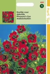 Rode Hortitops Zaden - Adonis Aestivalis Roodbloeiend