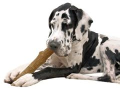 Petstages Dogwood Stick Bruin - Hondenspeelgoed - Large