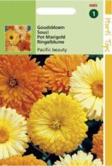 Oranje Merkloos / Sans marque Hortitops Zaden - Calendula off. Pacific Beauty gemengd
