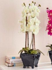 Witte Phalaenopsis KLiNGEL fuchsia