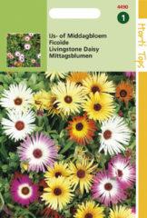 Gele Buzzy Seeds Hortitops Zaden - Mesembryanthemum (Dorotheanthus) criniflorum gem.