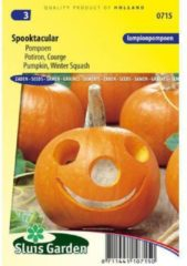 Sluis Garden Lampionpompoen zaden - Spooktacular
