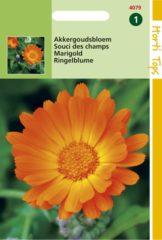 Oranje Merkloos / Sans marque Hortitops Zaden - Calendula Arvensis Akkergoudsbloem
