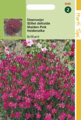 Rode Buzzy Seeds Hortitops Zaden - Steenanjer Brilliant (Dianthus deltoides)